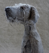 shaggy dog 1